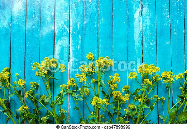 Beautiful blue background with yellow wildflowers - csp47898999
