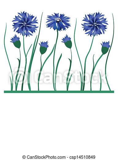 Beautiful blue cornflower isolated on white background - csp14510849