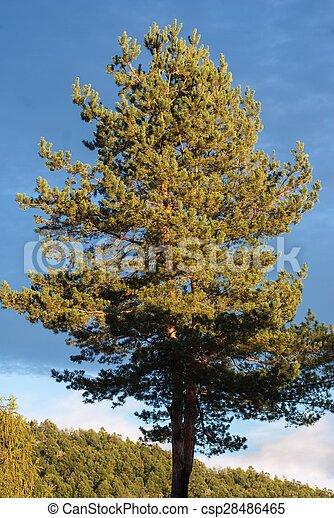 beautiful blue sky abov the tree - csp28486465