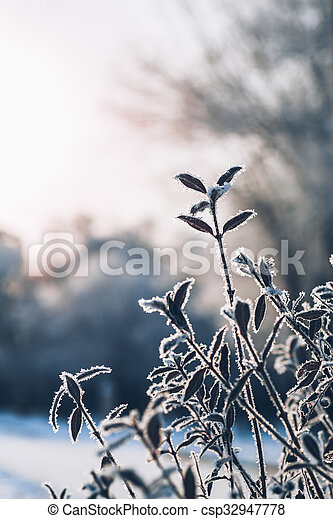 beautiful branch bush leaves in frost on the background of winter sun - csp32947778