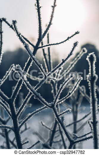 beautiful branch bush leaves in frost on the background of winter sun - csp32947782
