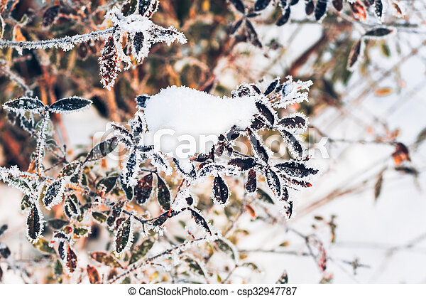 beautiful branch bush leaves in frost on the background of winter forest - csp32947787