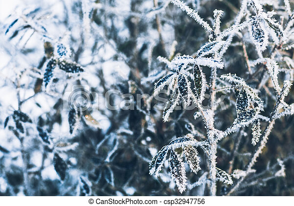 beautiful branch bush leaves in frost on the background of winter forest - csp32947756