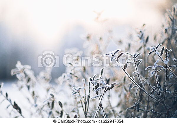 beautiful branch bush leaves in frost on the background of winter forest - csp32947854