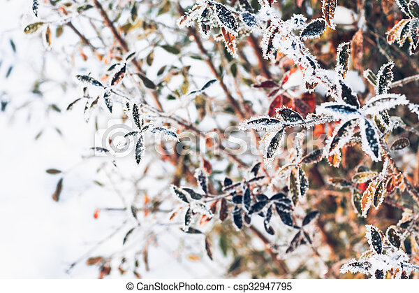 beautiful branch bush leaves in frost on the background of winter forest - csp32947795