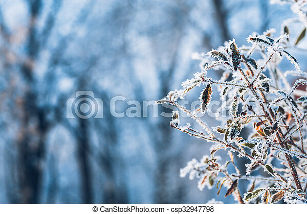 beautiful branch bush leaves in frost on the background of winter forest - csp32947798