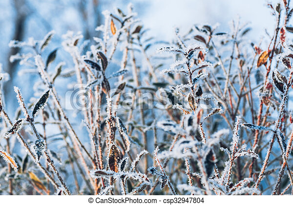 beautiful branch bush leaves in frost on the background of winter forest - csp32947804