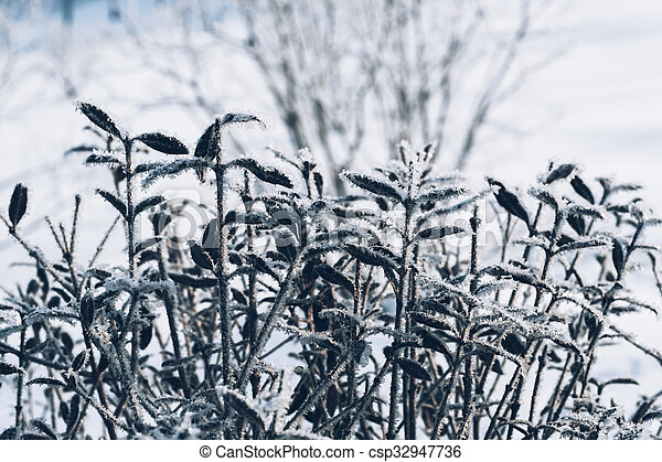 beautiful branch bush leaves in frost on the background of winter forest - csp32947736