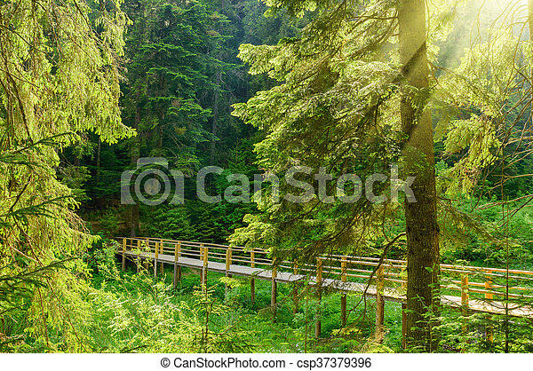 Beautiful bridge in the forest with rays of sun - csp37379396