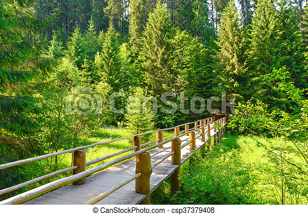 Beautiful bridge in the forest with rays of sun on - csp37379408