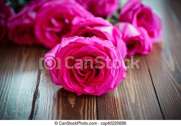 beautiful bright pink roses - csp40220688