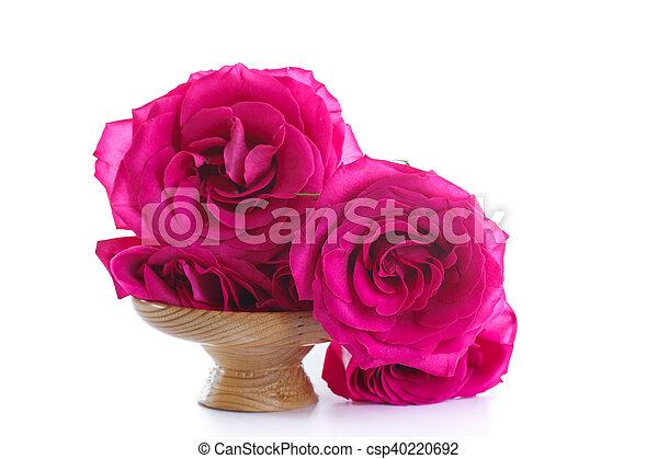 beautiful bright pink roses - csp40220692