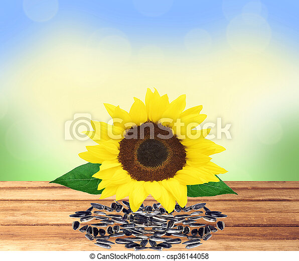 beautiful bright sunflower and seeds on wooden table over nature background - csp36144058