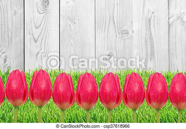 Beautiful bright tulips on wooden background - csp37618966