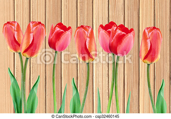 Beautiful bright tulips on wooden background - csp32460145