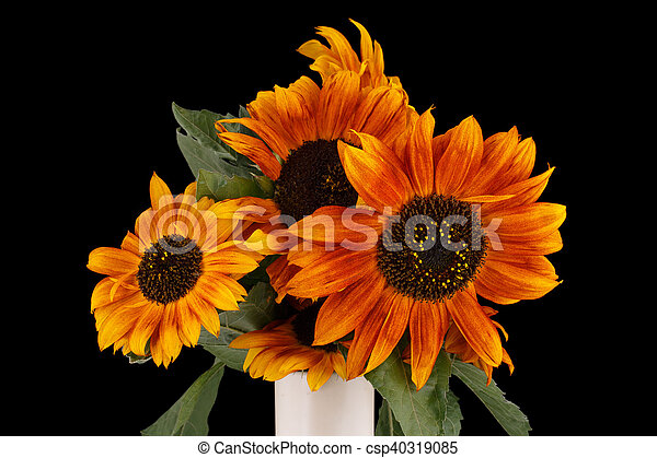 Beautiful brown sunflowers in vase on black background - csp40319085