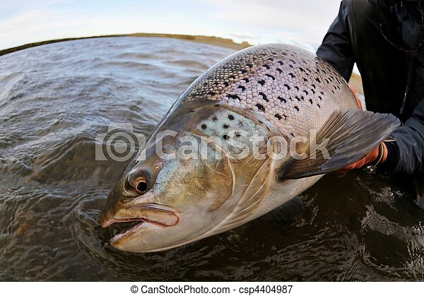 Beautiful brown trout - csp4404987