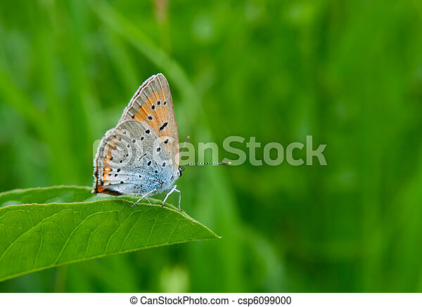 beautiful butterfly - csp6099000