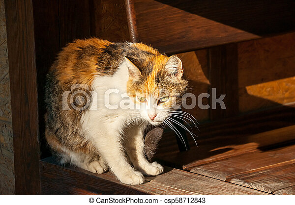 beautiful cat sitting in the sun and heated - csp58712843
