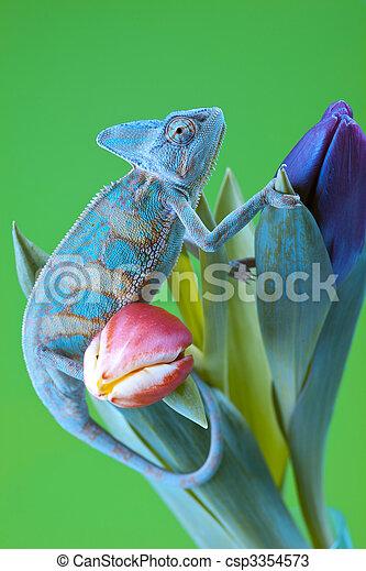 Beautiful chameleon - csp3354573