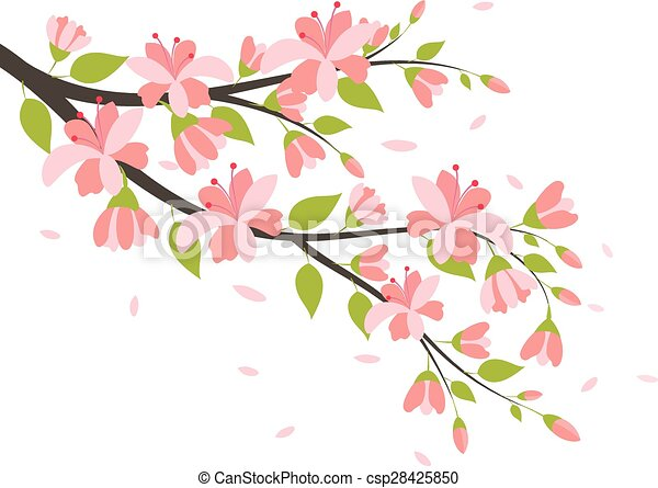 Beautiful Cherry Blossom Branches - csp28425850