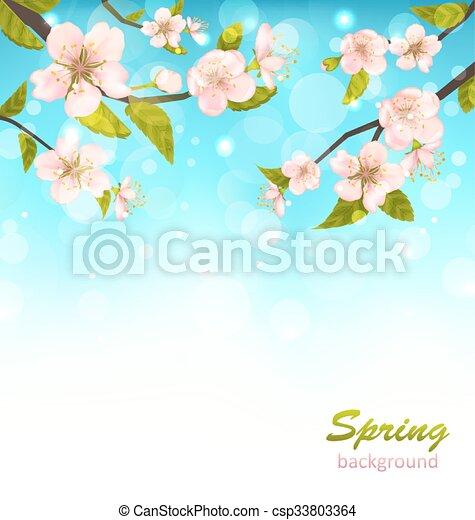 Beautiful Cherry Blossom - csp33803364