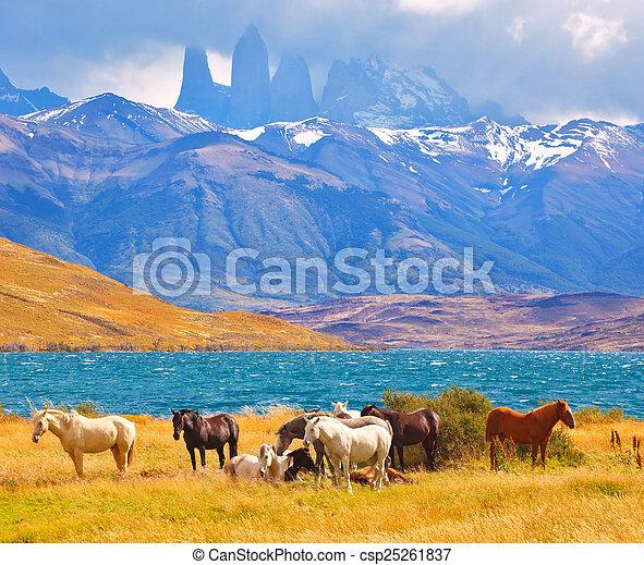 Beautiful cliffs Torres del Paine - csp25261837
