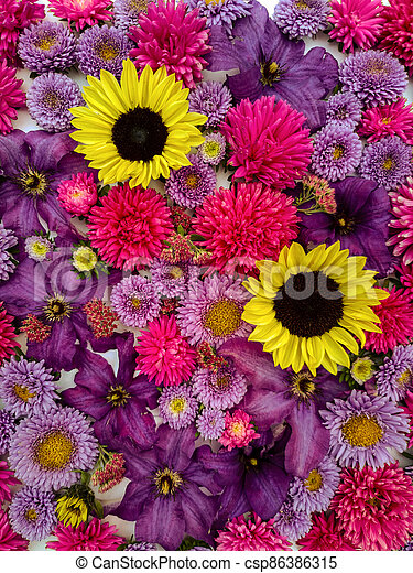 Beautiful collection of sunflower flowers, asters and clematis - csp86386315
