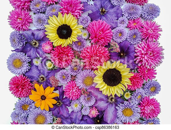 Beautiful collection of sunflower flowers, asters and clematis - csp86386163