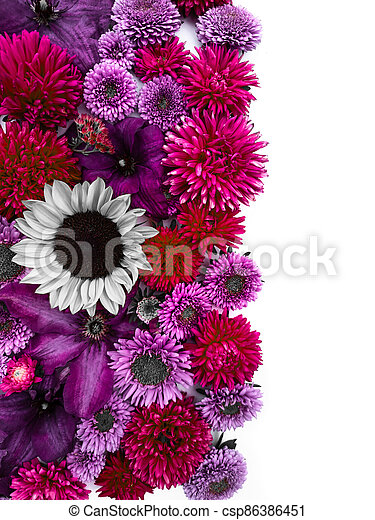 Beautiful collection of sunflower flowers, asters and clematis - csp86386451