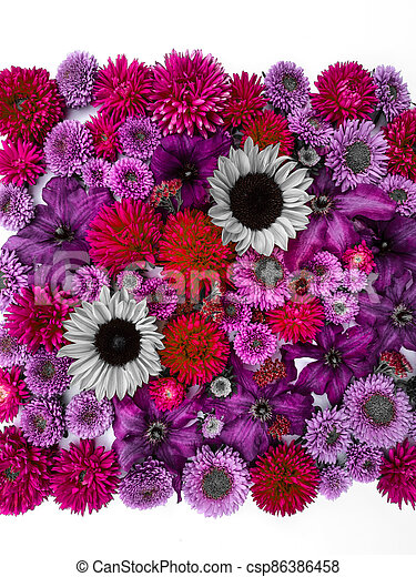 Beautiful collection of sunflower flowers, asters and clematis - csp86386458