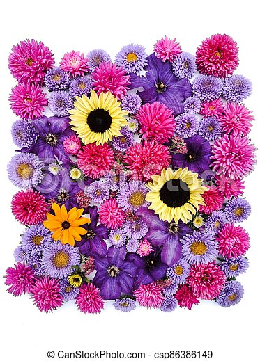 Beautiful collection of sunflower flowers, asters and clematis - csp86386149