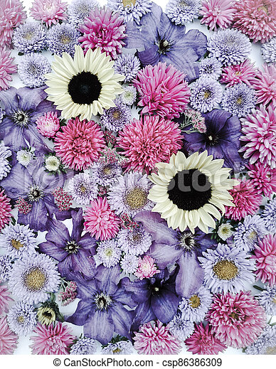 Beautiful collection of sunflower flowers, asters and clematis - csp86386309