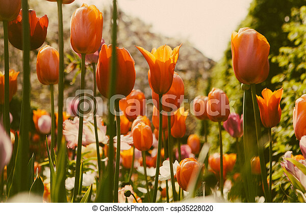 Beautiful colored flowers - csp35228020
