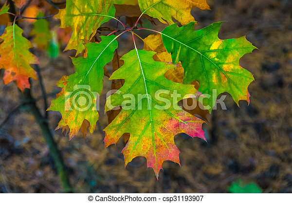 Beautiful colored leaves in autumn background - csp31193907
