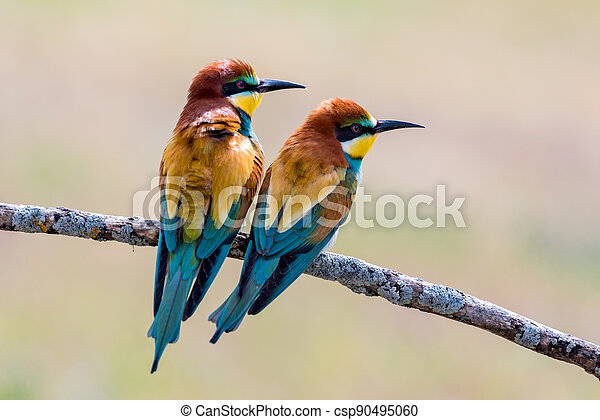 Beautiful colorful birds on a branch - csp90495060