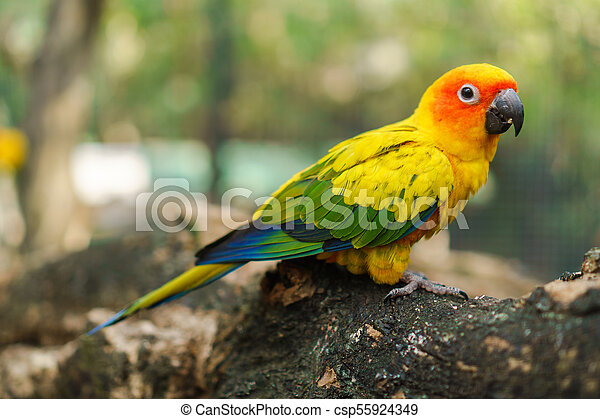 Beautiful colorful sun conure parrot birds on the tree branch - csp55924349