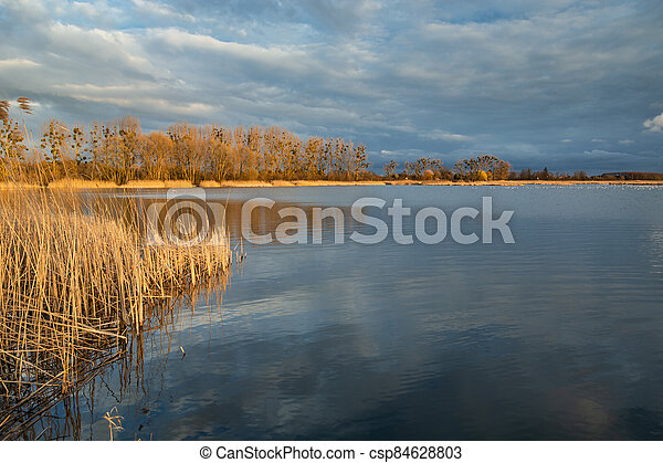 Beautiful colors of trees and reeds on a quiet lake - csp84628803