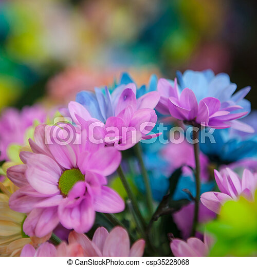 Beautiful colourful flowers - csp35228068