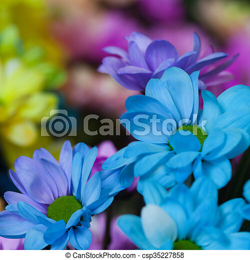 Beautiful colourful flowers - csp35227858