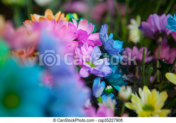 Beautiful colourful flowers - csp35227908