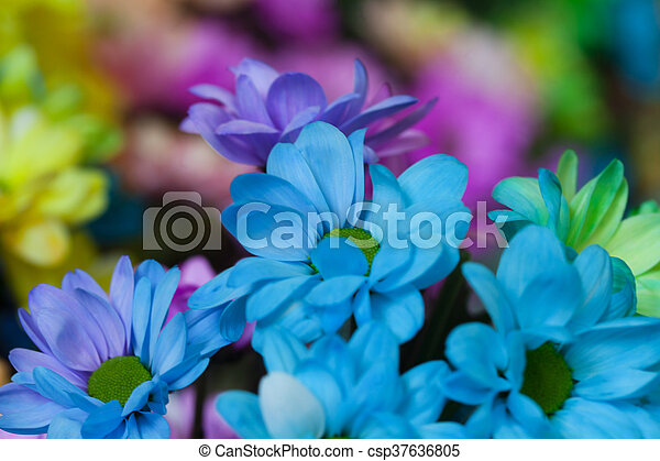 Beautiful colourful flowers - csp37636805