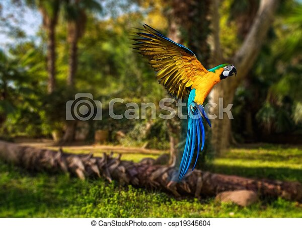Beautiful colourful parrot over tropical background  - csp19345604
