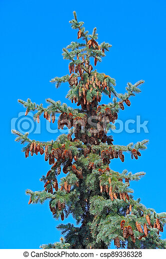 Beautiful cones on a branch - csp89336328