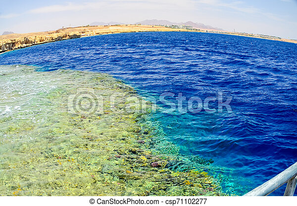 Beautiful coral reef in the sea under the water. Egypt, Sharm El Sheikh. - csp71102277