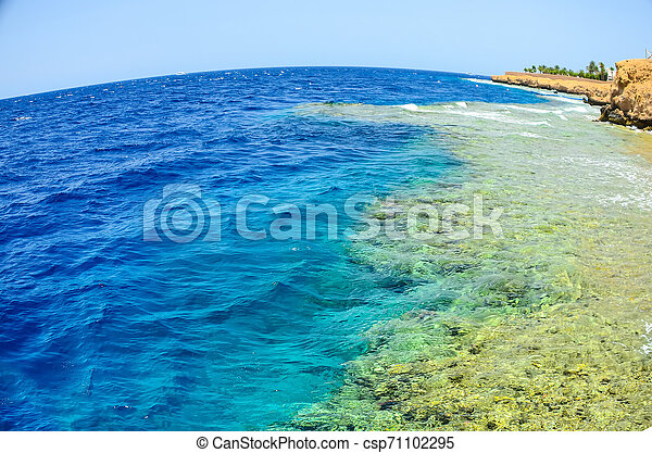 Beautiful coral reef in the sea under the water. Egypt, Sharm El Sheikh. - csp71102295