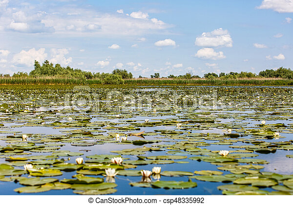 Beautiful Danube Delta - csp48335992
