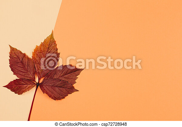 beautiful dark red leaf on a peach pastel background autumn colors place for text minimal close up https www canstockphoto com beautiful dark red leaf on a peach 72728948 html