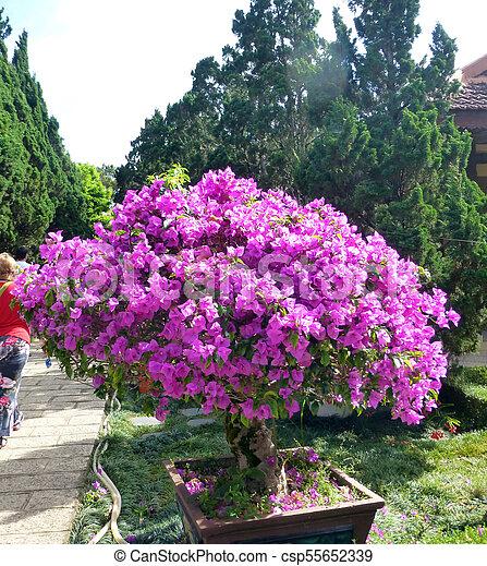 Beautiful decorative small tree with magenta flowers beautiful beautiful decorative small tree with magenta flowers csp55652339 mightylinksfo