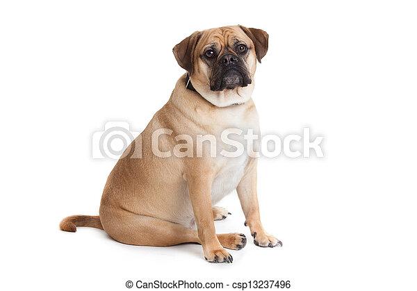 Beautiful dog - csp13237496